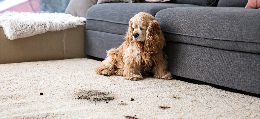 Must Have Cleaning Supplies for Pet Owners